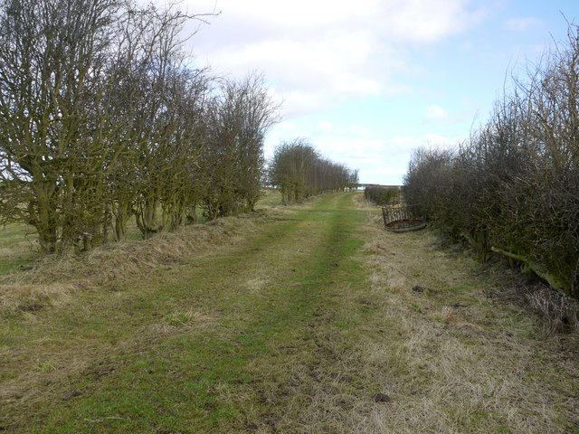 Footpath north of Callerton Grange