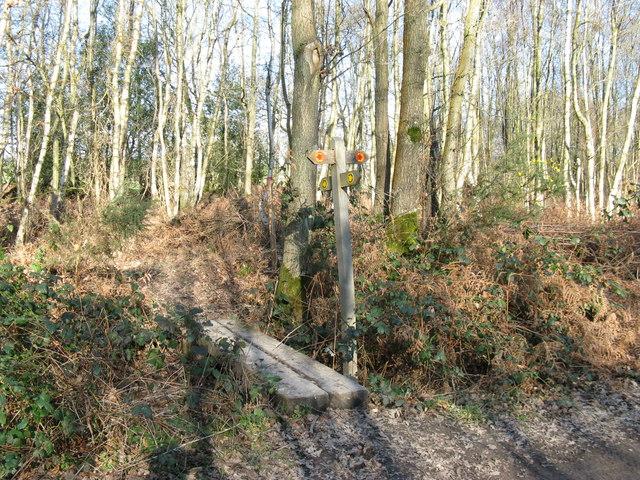 Path junction in Brickhurst Wood