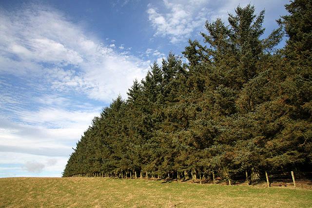 Field-woodland boundary on Bowden Moor