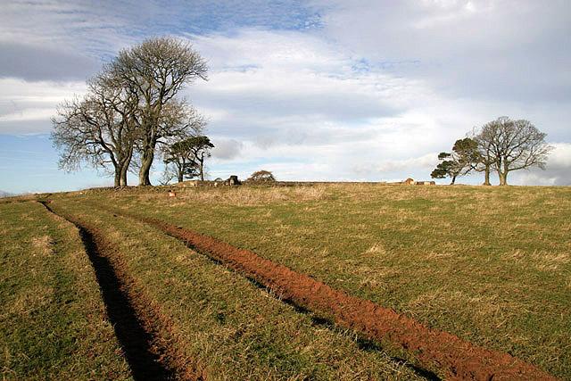 Tracks towards Bowdenmoor Stell