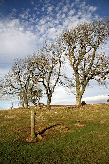 Trees at Bowdenmoor Stell