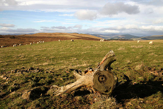 Improved pasture on Bowden Moor