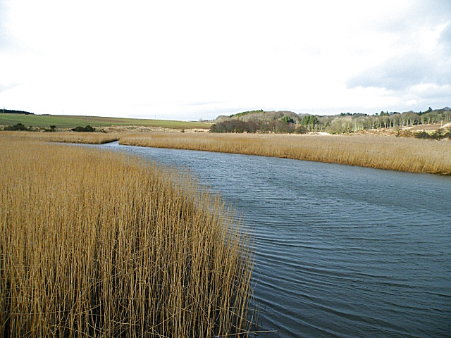 Reed Beds in the Ythan Estuary