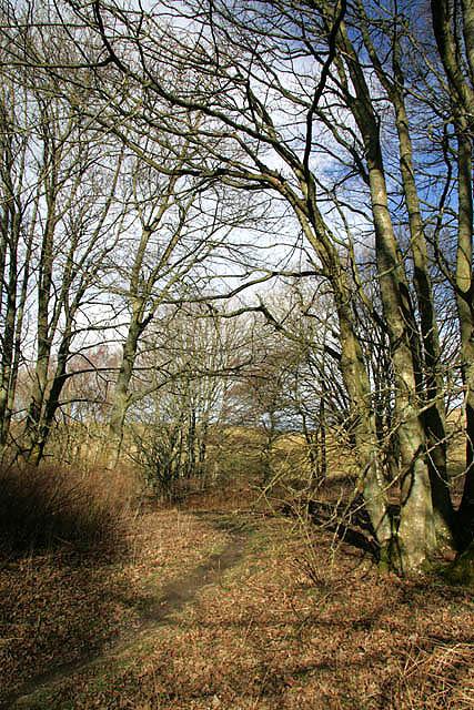 A woodland path by Whitmuirhill Loch