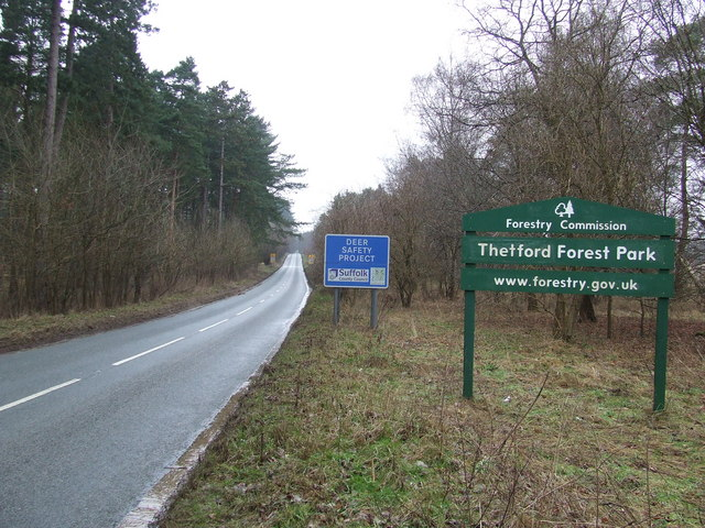Road And Forest Sign