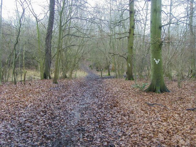 Turville Wood