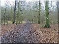 SU7591 : Turville Wood by Shaun Ferguson
