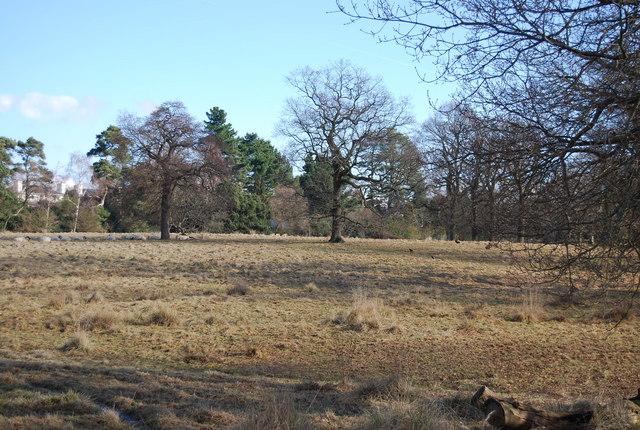Open space, Camden Park