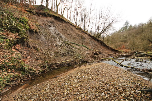 Collapse in Boggy Wood