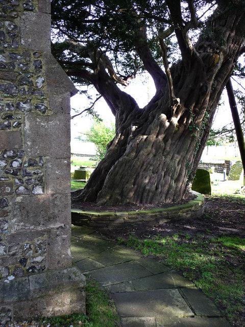 St Thomas Bedhampton, churchyard