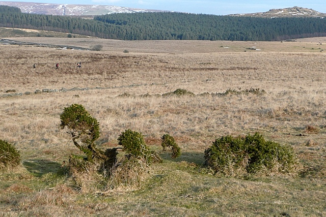 Moorland below Littaford Tors