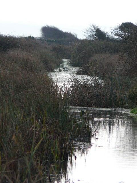 A waterway on Braunton Marsh