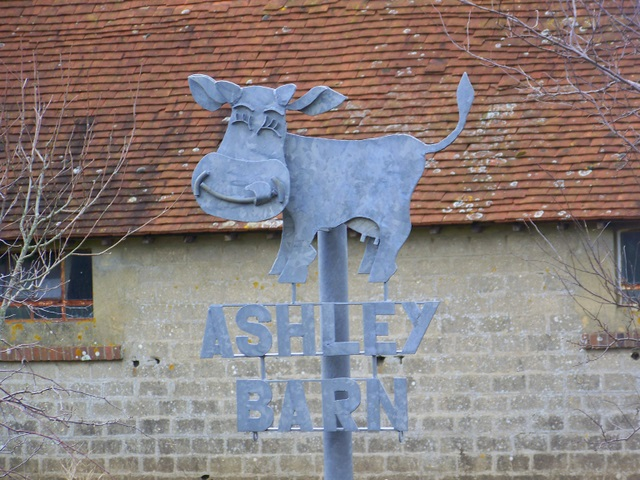Laughing cow, Ashley Barn