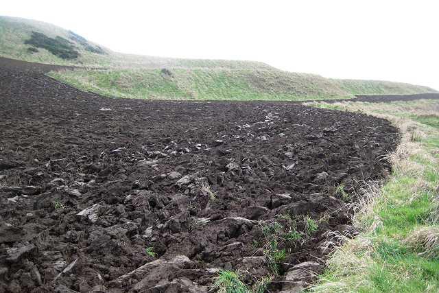 Kincraig fields