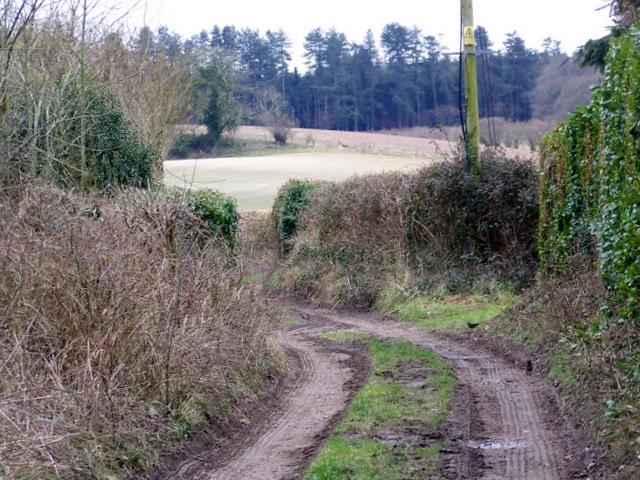 Bridleway, Affpuddle
