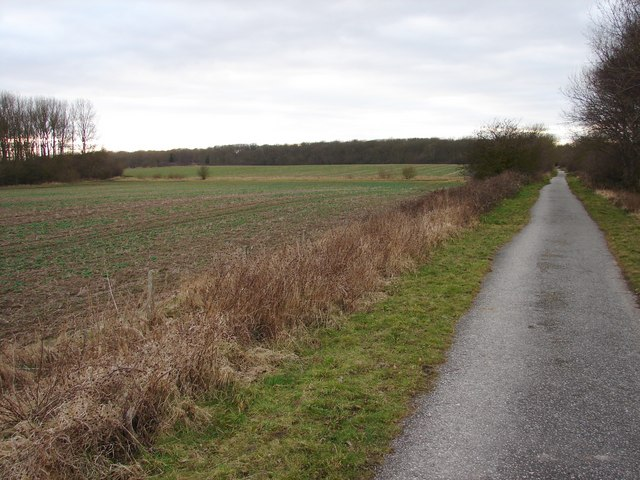 Towards Old Hag Wood on Route 64