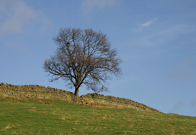 A tree on Buckholm Hill