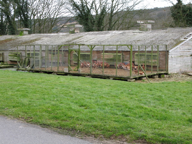 Chicken sheds at Little Farthingloe Farm