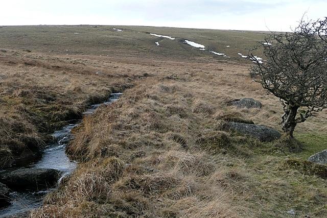 Buckfastleigh Moor