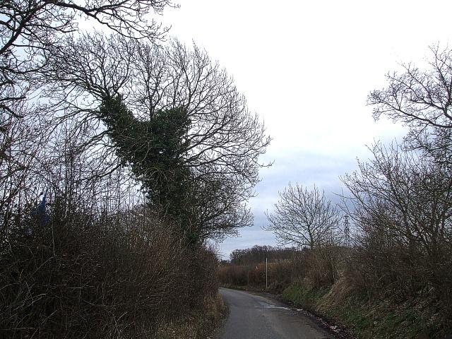 Isle of Wight Lane, view southeastwards