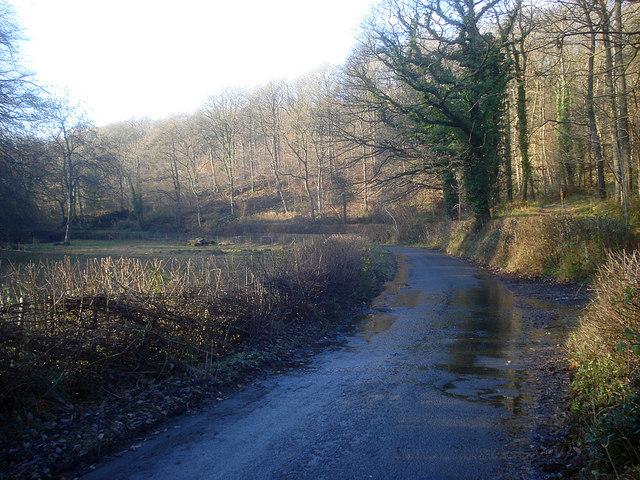 Lane at Barnett Wood