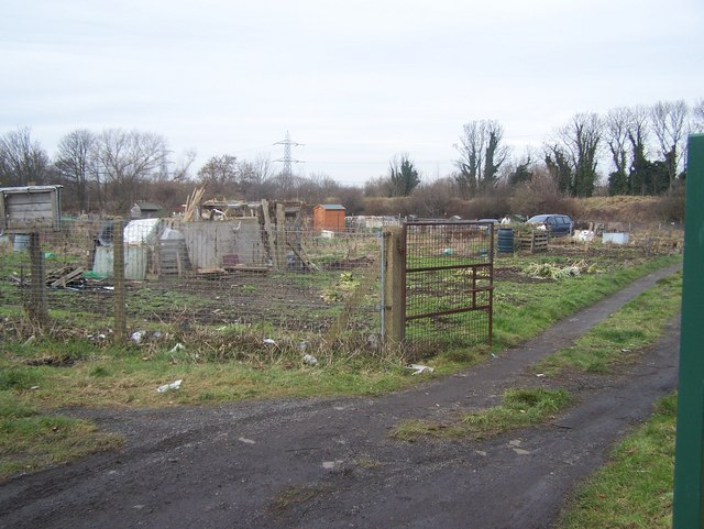 Allotments behind Wilmot Road