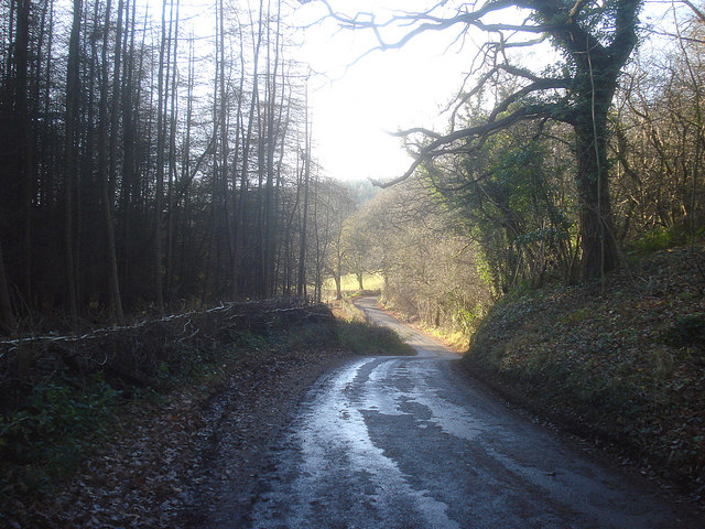 Lane at Barnett Wood - 2