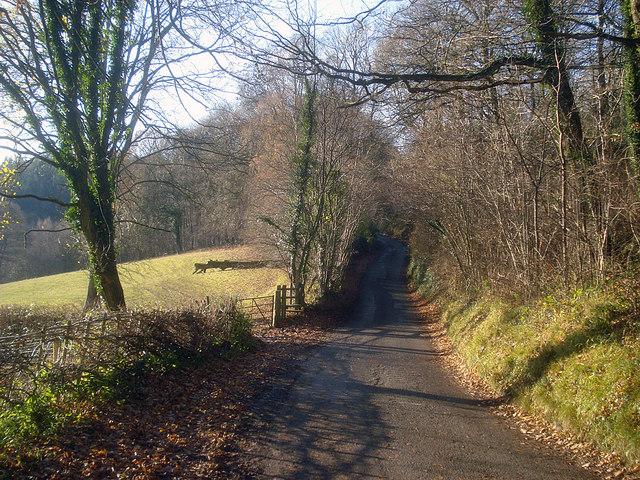 Lane at Barnett Wood - 3