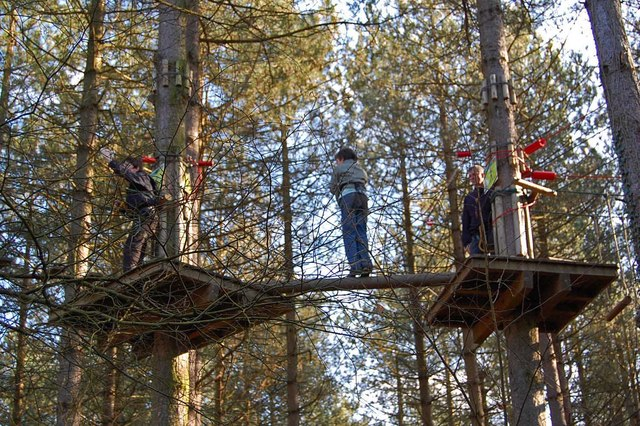 In the tree tops, Moors Valley Country Park, Dorset