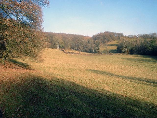 Field near Woodhampton Wood