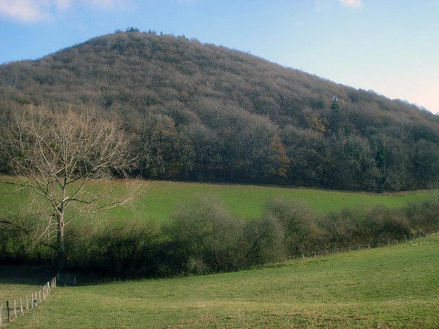 Woodhampton Wood