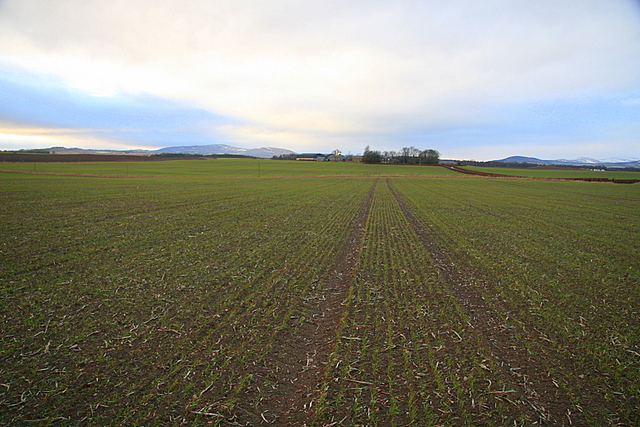 Cereal crop, Over Bow