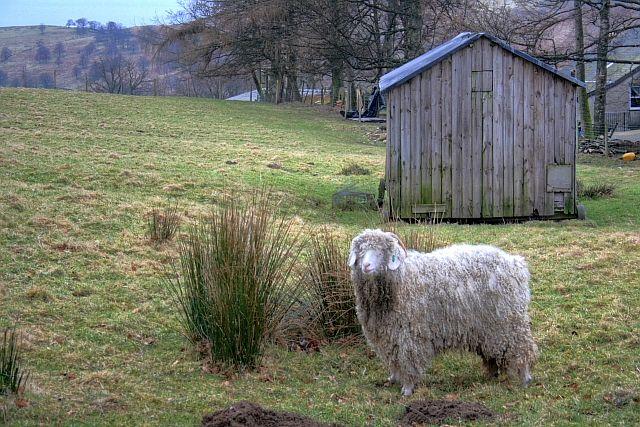 Shed in Field, Low Nest Farm