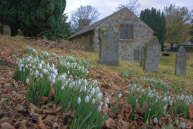Snowdrops, St. John's Churchyard
