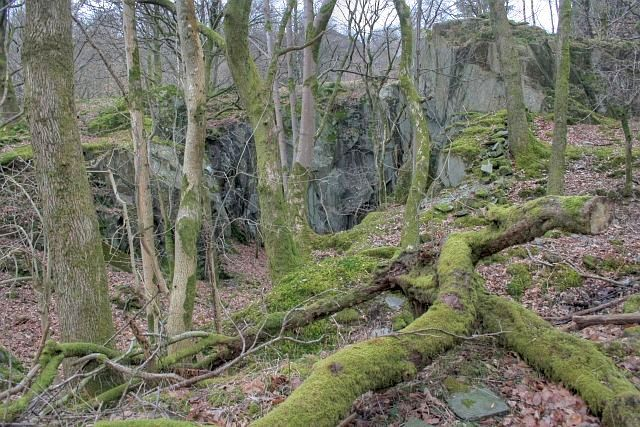 Disused Quarry, White Moss Wood