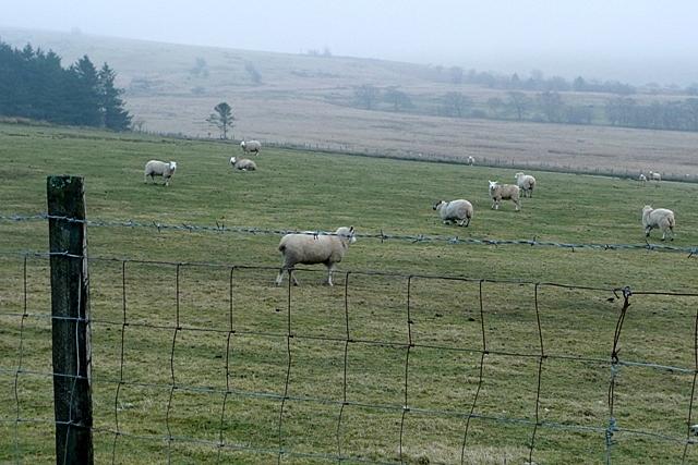 Pasture at Penlanwen