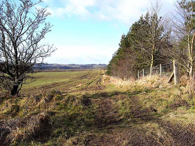 Field edge near Gunnerton
