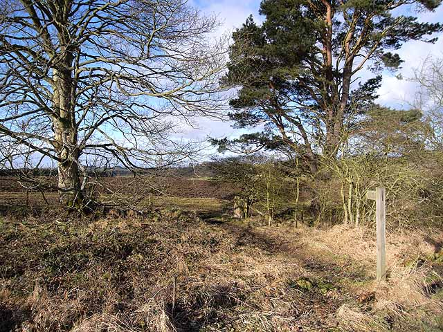 Footpath near Gunnerton