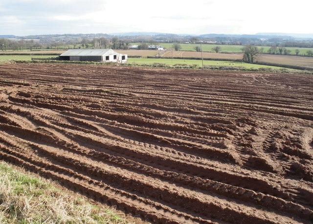 Bare field, near Sampford Peverell