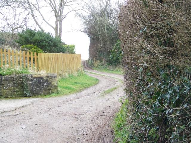 Bridleway near Affpuddle