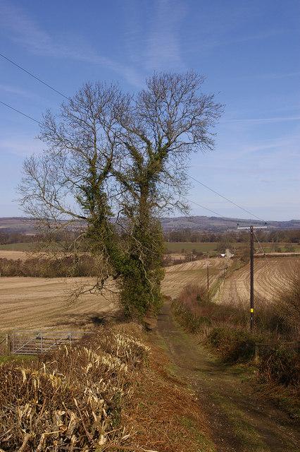Track to Hill Halton