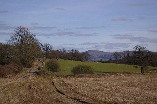 Lane from Lady Halton