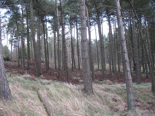 Beecraigs Woods