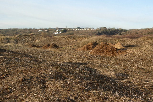 Vegetation heaps in duneland to the north of Traeth yr Afon