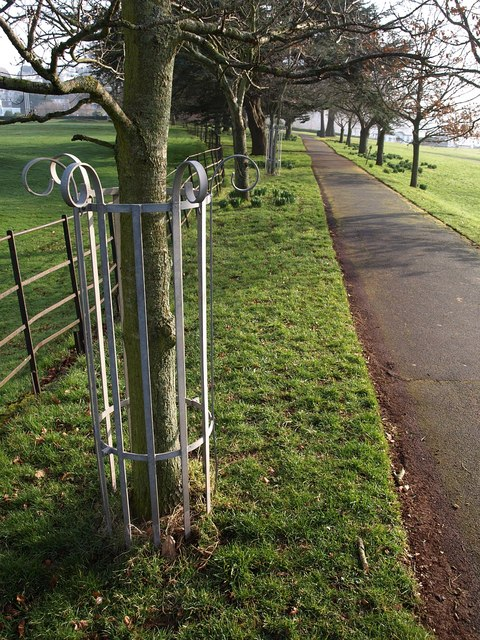 Tree guards, Torre Abbey Meadows