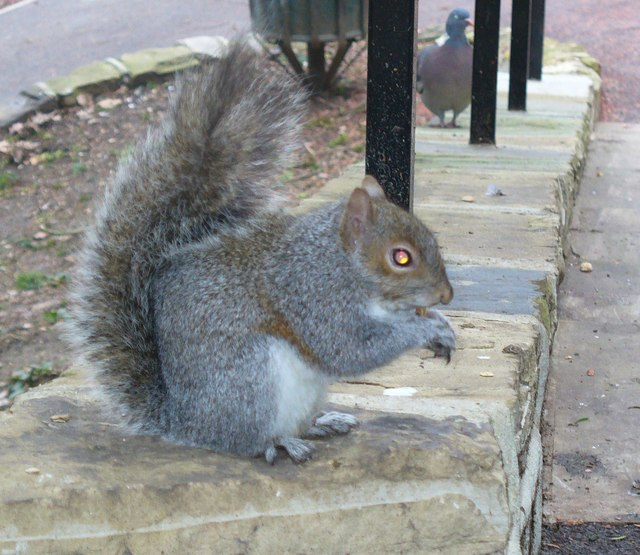 Richmond Hill Squirrel