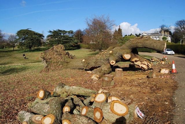 Tree surgery, Calverley Park