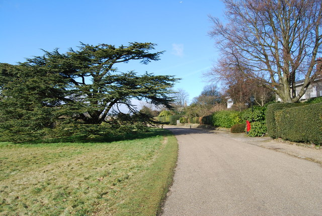 Large Yew tree, Calverley Park