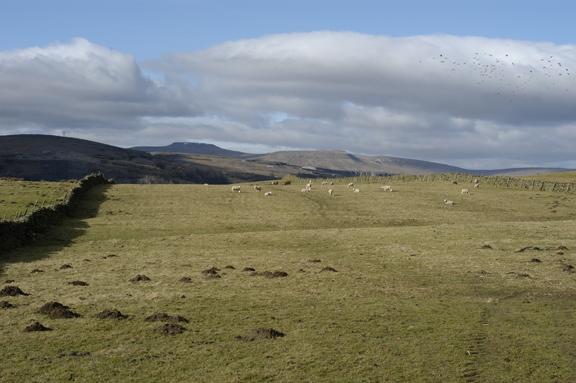 Studfold Low Pasture