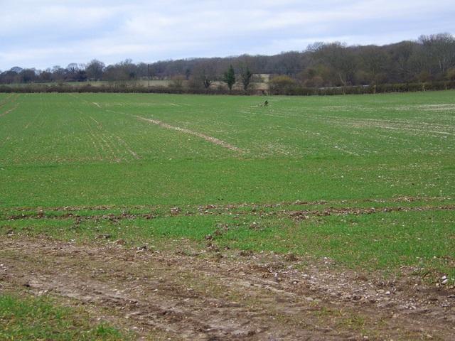 Footpath to Knighton Wood